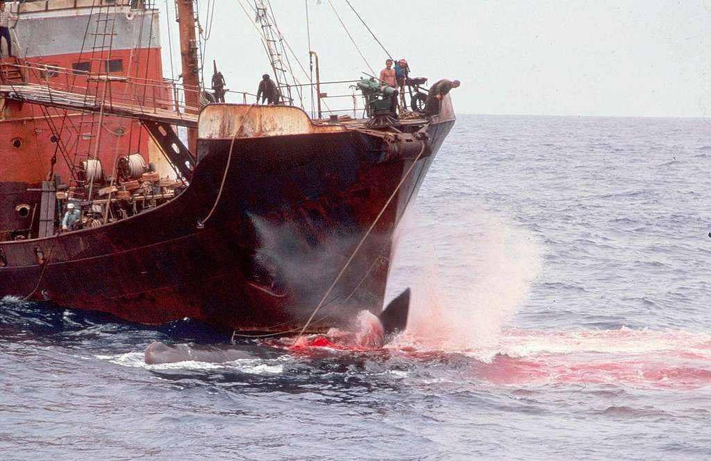 Memories of Lawrence Ferlinghetti (1919-2021) aboard a Greenpeace ship