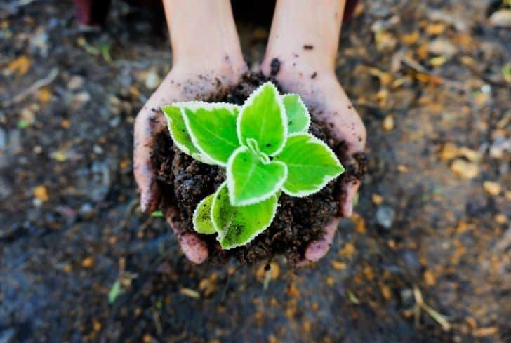 25+ Remarkable Ways to Conserve and Protect Soil Fertility ...