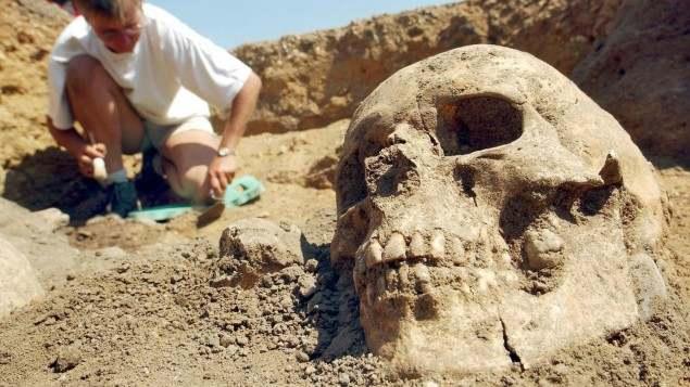 PaläogenetikDas Archiv der Knochen