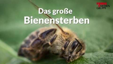 Tierfilmer Andreas Kieling im Interview