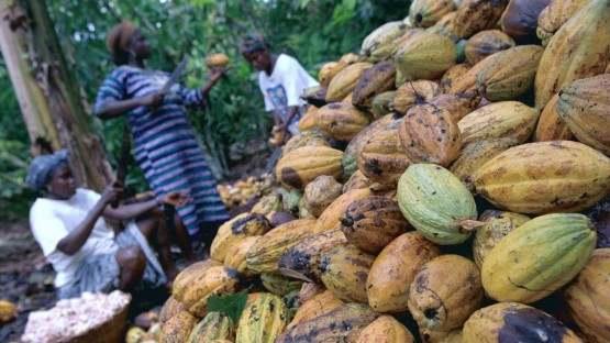 Friedensnobelpreis für WelternährungsprogrammWie die Corona-Pandemie den Hunger in der Welt verschärft