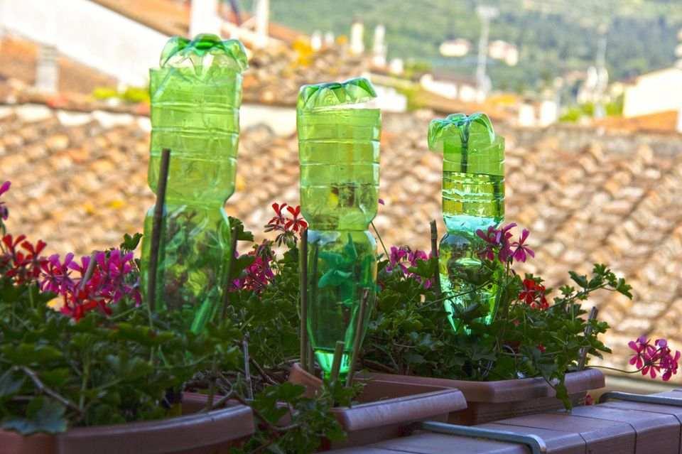 Pflanzen bewässern im Urlaub: so klappt's