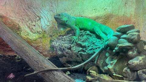 Wegen Ferien und Corona: Tierheime befürchten Abgabe-Welle