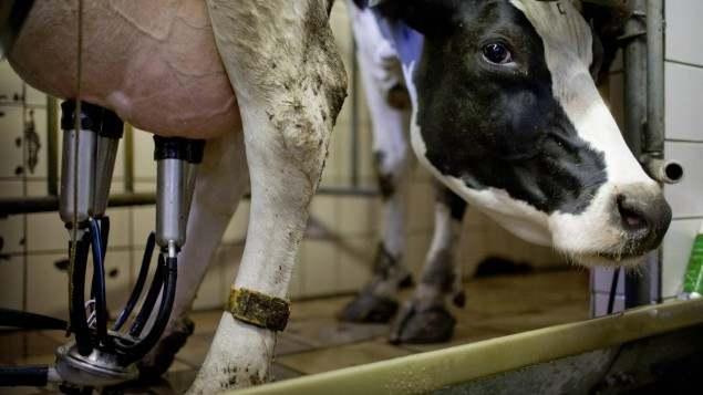 Die Zukunft der Nutztierhaltung - Die Grenzen der ...
