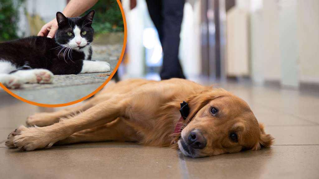 Hundefutter/Katzenfutter: Inhaltsstoffe können Hund und Katze krank machen
