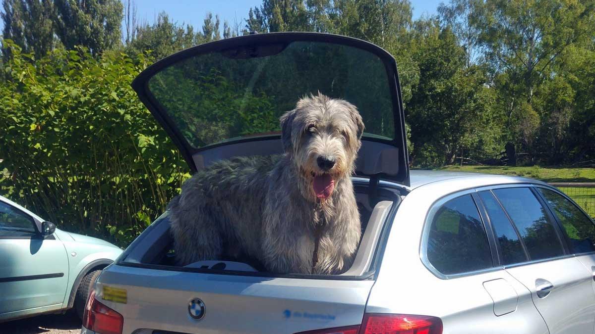 Urlaub mit Hund – So kommt das Haustier gut im Urlaub an