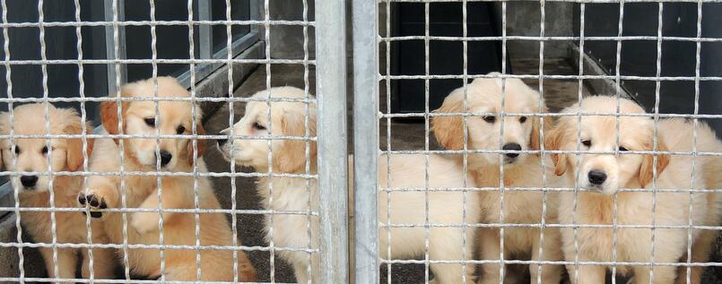 In Tierheimen werden immer mehr Katzen und Hunde abgegeben